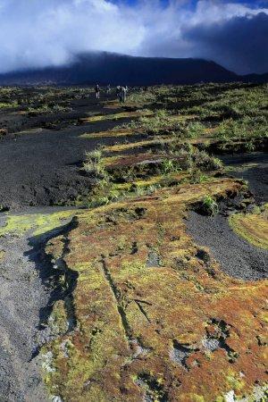 Inside the 12km.-wide volcanic caldera. Ambrym island-Vanuatu. 5876