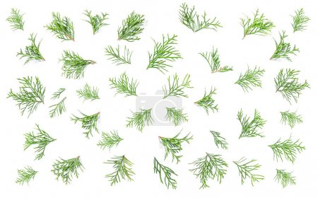 Floral flat lay background Coniferous branches Minimalistic
