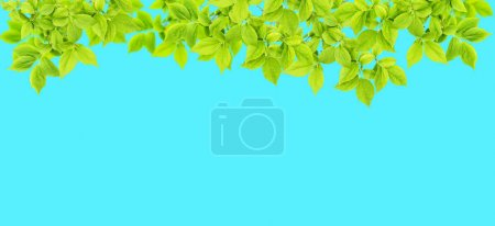 Photo for Spring tree branch. Green leaves on blue background. Nature banner - Royalty Free Image
