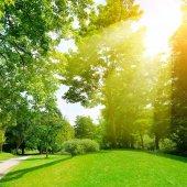 Bright sunny day in park. Sun rays illuminate green grass and tr