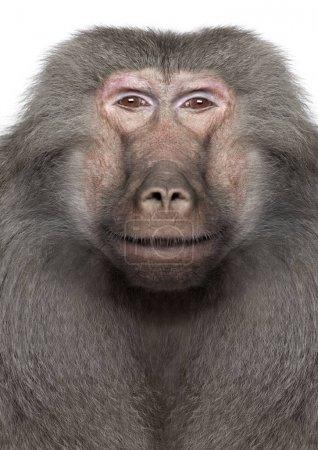 Baboon  -  Digital enhancement