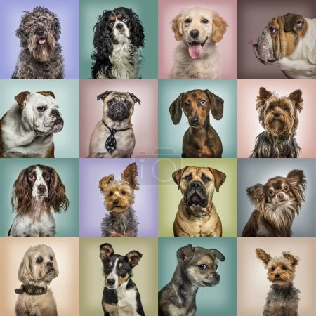 Photo for Composition of dogs against colored backgrounds - Royalty Free Image