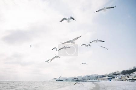 Photo for Seagulls flying in cloudy sky over sea shore, with city behind - Royalty Free Image