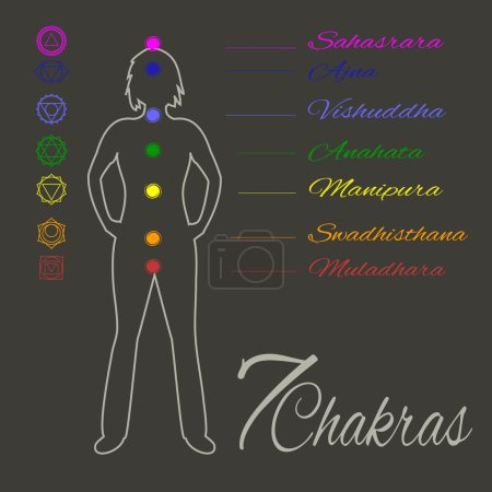Illustration for Location of main seven yoga chakras on the human body.Female silhouette with all the basic energy centers.Color vector illustration.Alternative medicine.Oriental or complementary therapy.Wellness. - Royalty Free Image