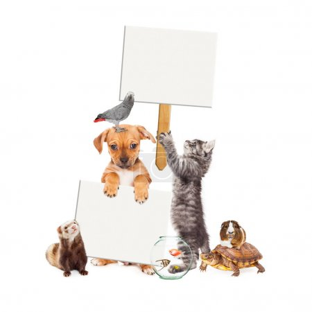 Group of Pets With Blank Signs