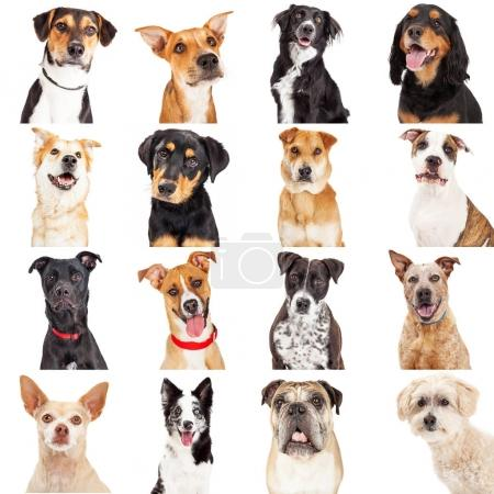 Multiple Crossbreed Dog set