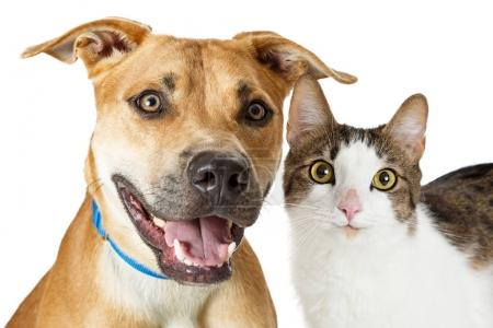 Crossbreed Cat and Dog Together