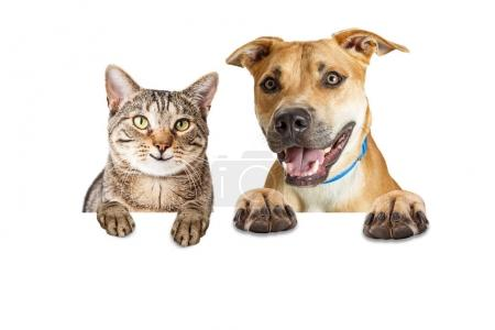 Photo for Dog and cat together hanging paws over blank white background with happy smiling expressions - Royalty Free Image