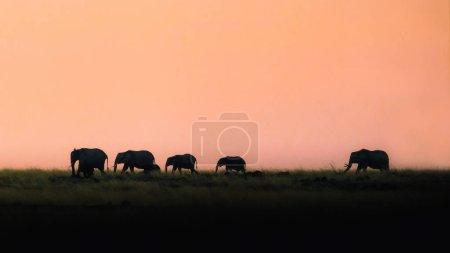 Photo pour Silhouettes de troupeau d'éléphants marchant le long des prairies du triangle de Mara au Kenya, Afrique au coucher du soleil - image libre de droit