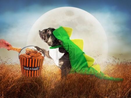 Dog in Costume on Halloween Night