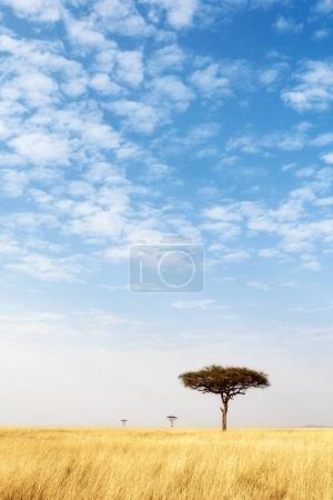 Open Grass Field With Big Blue Sky - Vertical