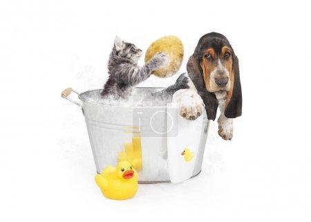 kitten washing back of dog in tub
