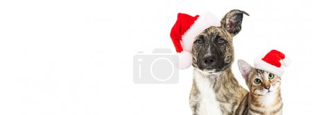 breed dog and kitten in Santa hats
