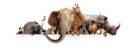 Row of African safari animals hanging their paws over a white banner.