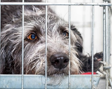 Sad Rescue Dog Lying in Wire Cage