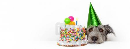 Cute dog with party hat and birthday cake. Horizontal web banner or social media cover with copy space