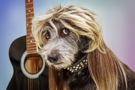 Photo for Punk rock dog with guitar wearing mullet hairstyle wig and spiked collar - Royalty Free Image