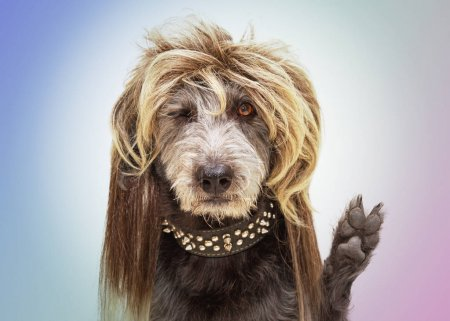 Photo for Dog dressed as punk rock star wearing mullet wig and raising paw with fingers in peace sign - Royalty Free Image