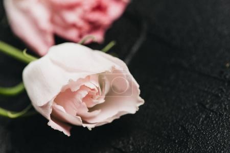 Pink flower on a dark cement background