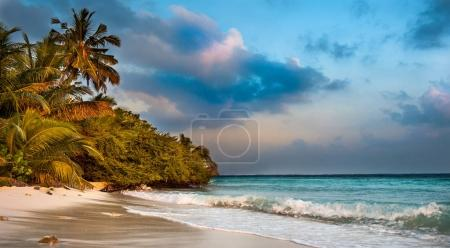 Photo for Tropical beach in Maldives.Tropical Paradise at Maldives with palms, sand and blue skyUntouched tropical beach in Maldives.Caribbean paradise - Royalty Free Image