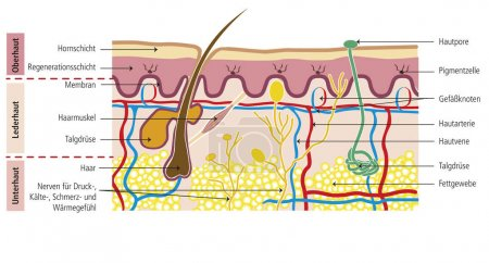 Structure of human skin color theme illustration