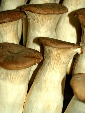 close-up of King Oyster Mushroom