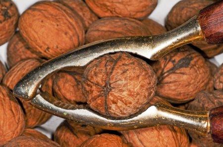 Sweet Walnuts close up shot