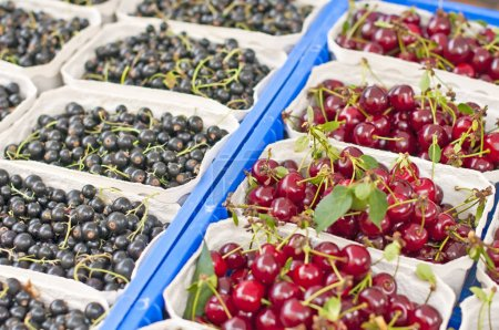 set of white boxes with cherries and blackcurrants, close-up