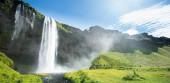 Seljalandsfoss waterfall in Iceland in Summer