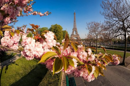 Photo pour Tour Eiffel avec arbres de printemps à Paris, France - image libre de droit