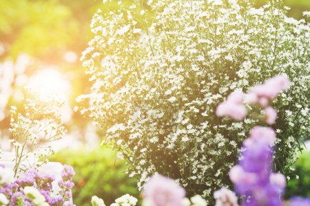 Photo for Bouquet of flowers, Gypsophila - Royalty Free Image