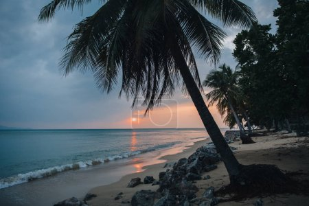 Photo for Palm trees on sandy beach at sunset, Ko Tao island, Thailand - Royalty Free Image