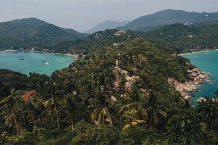 Photo for Beautiful green palm trees and calm water at Ko Tao island, Thailand - Royalty Free Image