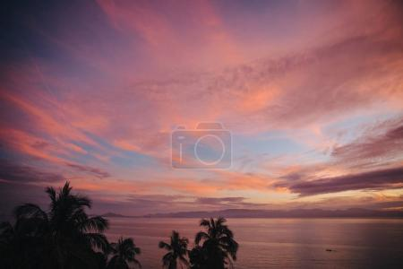 Photo for Silhouettes of palm trees and beautiful scenic seascape at sunset, Krabi, Thailand - Royalty Free Image