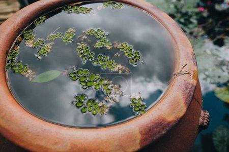 Photo pour Vue rapprochée de feuilles vertes dans l'eau dans une marmite et étang à Hue, Vietnam - image libre de droit