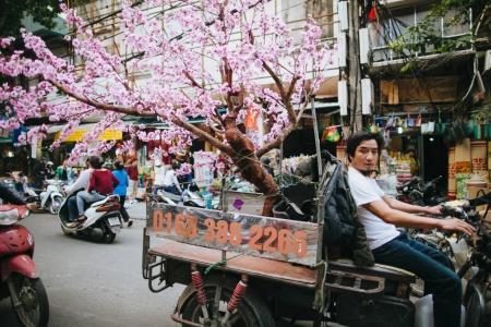 Sakurabaum