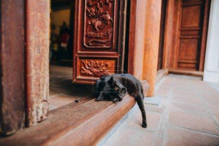 Photo pour Vue rapprochée du chat noir dormant à l'entrée du vieil immeuble à Hanoi, Vietnam - image libre de droit