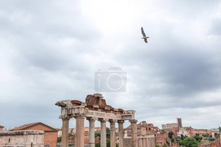 Photo for Bird in sky over Ancient ruins in Roman Forum - Royalty Free Image