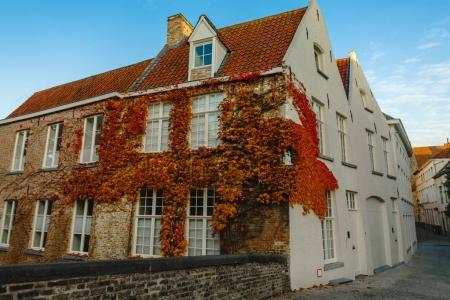 Photo for Narrows street with beautiful old buildings and ivy on wall, brugge, belgium - Royalty Free Image