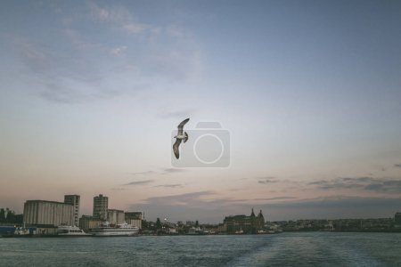 Photo for Seagull flying over sea in Istanbul, Turkey - Royalty Free Image