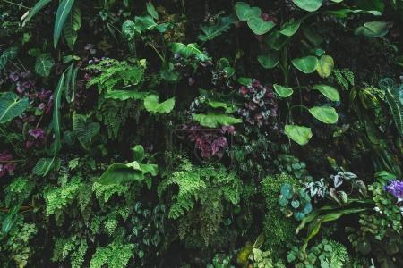 Photo for Close up view of plants with green leaves - Royalty Free Image