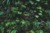 """Постер, картина, фотообои """"растения"""""""