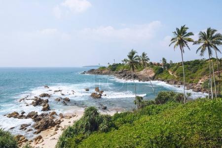 Photo pour Belle vue panoramique sur les palmiers sur le littoral, Mirissa, Sri Lanka - image libre de droit