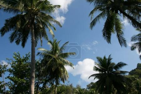 scenic view of palm trees and cloudy sky, phuket, thailand