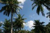 """Постер, картина, фотообои """"живописный вид на пальмовые деревья и пасмурное небо, Пхукет, Таиланд"""""""