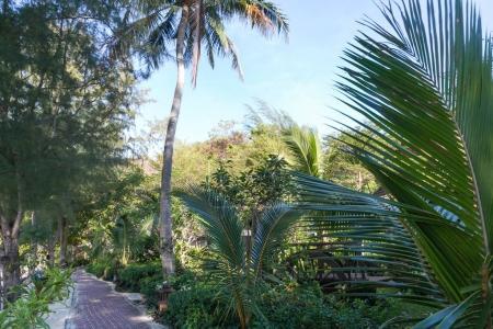 Photo pour Vue panoramique sur les palmiers verts, les plantes et le sentier, les îles phi phi - image libre de droit