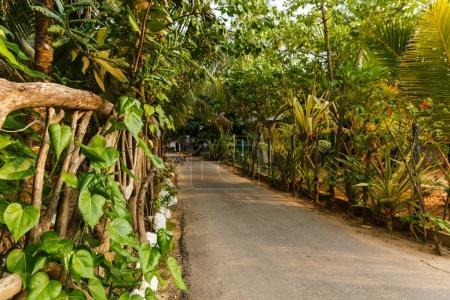Photo pour Belle vue panoramique sur les arbres verts autour du chemin vide, sri lanka, unawatuna - image libre de droit
