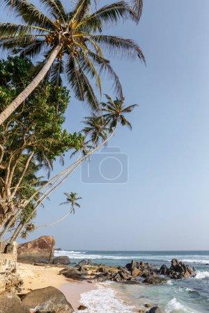 Photo for Beautiful scenic view of palm trees om coastline and blue sky, sri lanka, unawatuna - Royalty Free Image