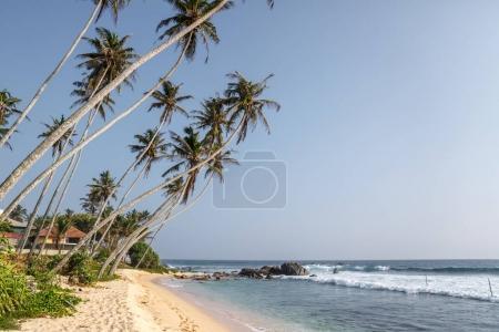 Photo pour Belle vue panoramique de la paume arbres om littoral et bleu ciel, sri lanka, unawatuna - image libre de droit