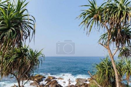 Photo pour Belle vue panoramique sur les palmiers om littoral et ciel bleu, sri lanka, mirissa - image libre de droit